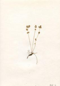16 dm2 copyright by 1975 herman de vries, 16 dm – ein essay. 1975/1979, Pflanzen auf Papier in Klarsichtfolie. Foto: Joana Schwender