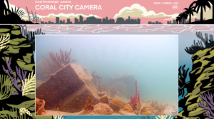 Coral City Camera copyright by 2020 Coral Morphologic.